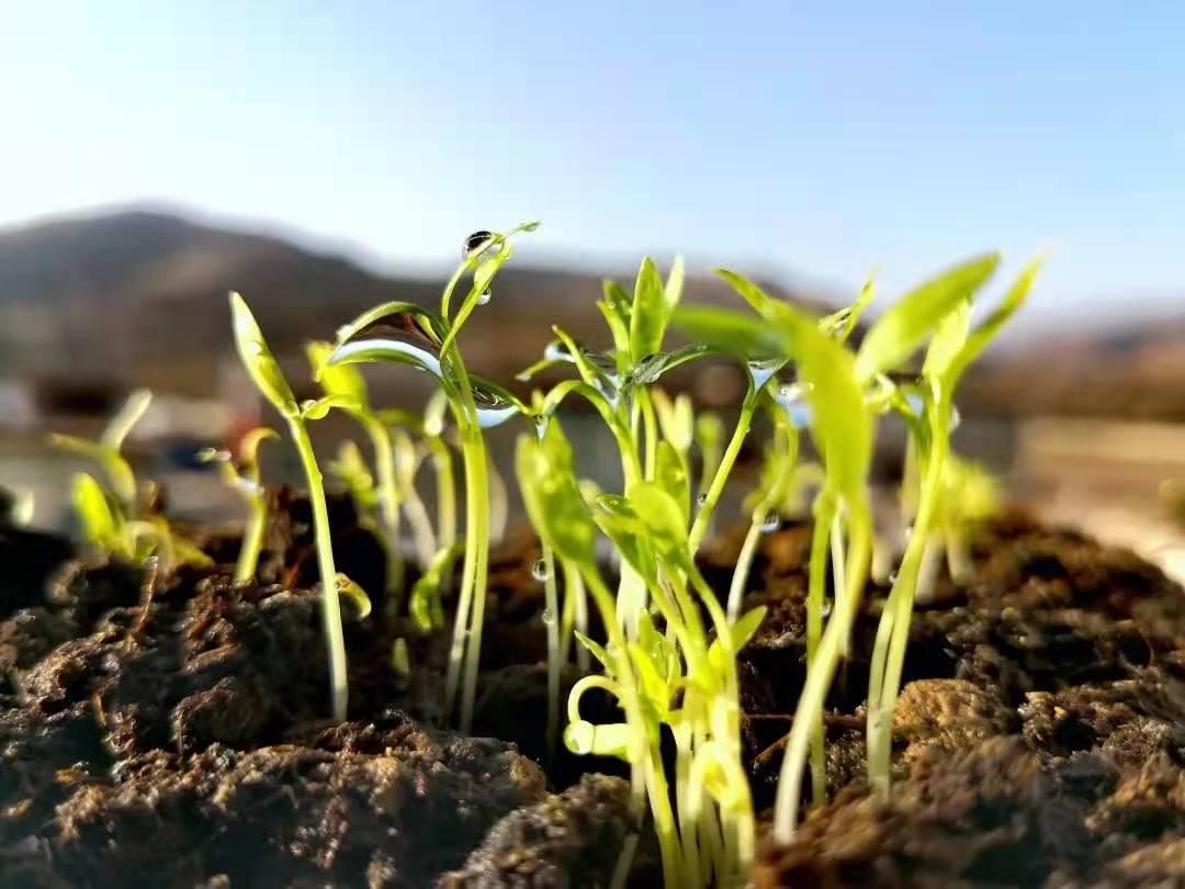 春季--跟着岐黄学养生--起居饮食篇